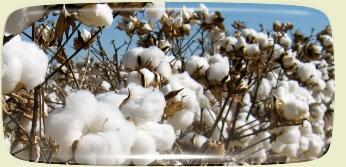 výroba matrací z bavlny